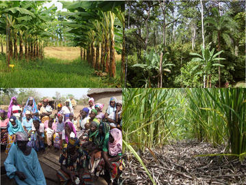 Example of case studies of the STRADIV project (F.W.I., Central America, Burkina Faso, Madagascar) © Cirad